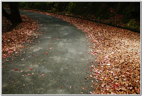 紅葉步道5