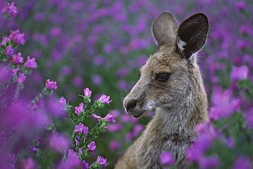 Roo in flowers