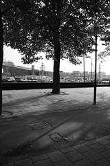 waking up (P'TITEPUCE) Tags: street morning light shadow bw tree amsterdam nemo noiretblanc