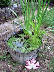 Whiskey Barrel Pond