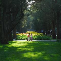 Sunlight through cypresses (NowJustNic) Tags: china park flowers summer tree girl grass children nikon child tulips beijing cypress      zhongshanpark d80 nikkor18135mm