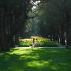 Sunlight through cypresses (NowJustNic) Tags: china park flowers summer tree girl grass children nikon child tulips beijing cypress 北京 中国 花 公园 中山公园 zhongshanpark d80 nikkor18135mm