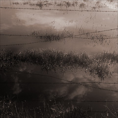 swamp sky (daniel southard) Tags: california dairyland warmtone isolette marchflooding scannedfromfilm clearingstorm reflectedclouds dcomposed swampypasture danielsouthard
