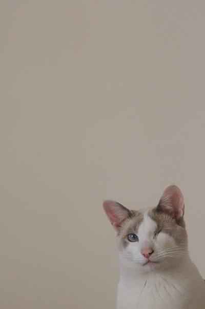 446066709 5002675c79 o again, cat