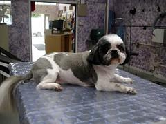 dog pet cat groom grooming