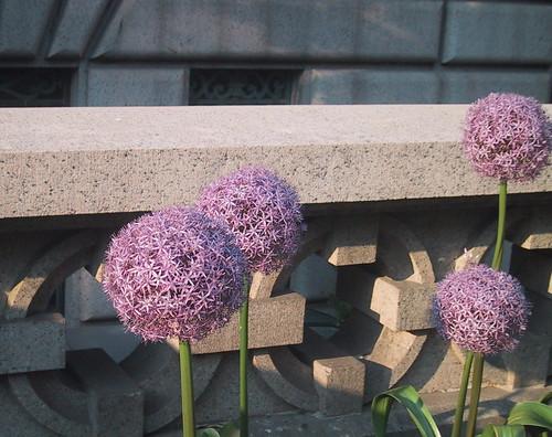 Big Purple Flower Balls