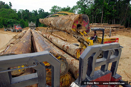 A log grappler from the Rimbunan Hijau Timber company loads logs onto a logging truck in the Baram District of Sarawak, Malaysia. Malaysia has lost almost all of it's primary rainforest outside of nat