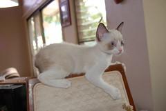 (Eubank photography maui) Tags: cat hawaii kitten kitty maui lahaina kaanapali napili katmanx