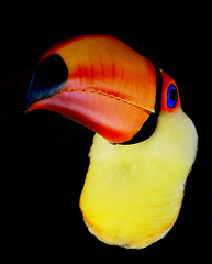 Toucan (ucumari) Tags: bird march toucan nikon bravo d70s 1961 2
