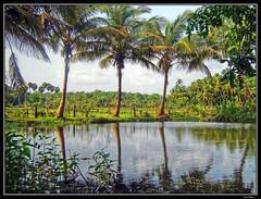 Kerala... - by Hari_Menon