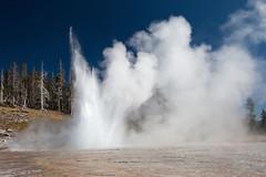Eruption Grand Geyser (klauslang99) Tags: klauslang nature naturalworld northamerica national park yellowstone geyser eruption water