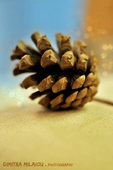 feeling festive... (dimitra_milaiou) Tags: pine festive love holidays day color macro close up closeup nature forest tree bokeh photography nikon d90 d 90 xmas greece athens city europe milaiou dimitra happy happiness christmas colour blue light background blur world planet earth home decor decoration small things nice moment magic smile feelings 50mm f18 minimal minimalism serene