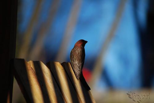 Shadows_birdie[2009]