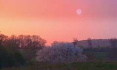 A Vision of Spring (fossibear) Tags: 1001nights soe otw flickrsbest platinumphoto ultimateshot