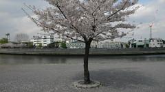 小豆沢河岸広場