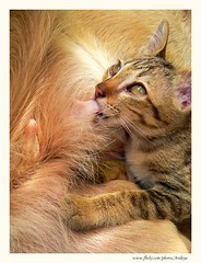 Miracles of Love (Araleya) Tags: dog pet love beautiful animal cat wonderful thailand fz20 kitten asia southeastasia mood searchthebest good miracle panasonic care goodmood animalplanet sense peopleschoice naturesfinest blueribbonwinner naturegallery loveandcare supershot araleya bestofcats anawesomeshot aplusphoto diamondclassphotographer flickrdiamond senstational theperfectphotographer