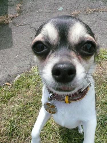 Cute Begging Puppy