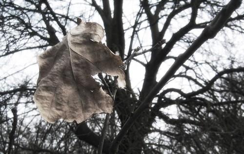 One Last Leaf
