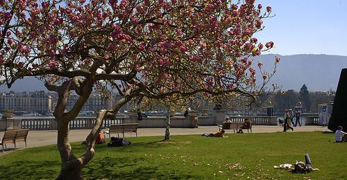 Springtime in Geneva