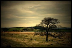 (andrewlee1967) Tags: uk england tree landscape bravo sheep yorkshire moors naturesfinest blueribbonwinner andrewlee magicdonkey flickrsbest canon400d andrewlee1967 anawesomeshot superaplus aplusphoto goldenphotographer diamondclassphotographer andylee1967 focusman5