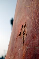Rusty bark