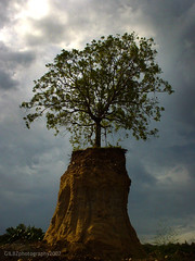 "Lonely Tree (gilbert ""gilbz"" gamolo) Tags: tree destruction environment vanishing soe quarry davao sonycybershot lonelytree deforestation cebusugbo abigfave treesubject gilbzphotography flickrphotoaward"
