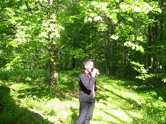 woods tea