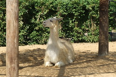 London Zoo #35