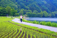 Therapeutic Walk ( Spice (^_^)) Tags: camera trip travel blue trees vacation people lake holiday man color reflection green nature water beautiful japan canon geotagged asian person photography eos japanese photo amazing interesting model shoes kiss asia flickr image walk creative picture vivid explore human photographs photograph enjoy  5d portfolio dslr tao stroll   ricefields    gettyimages   nihonjin    canoneos5d    abigfave  digitalx enjoyphotographs