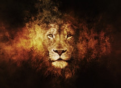 Lion (thesimplestartup) Tags: realchangeisnoteasydoubttryfailbutnevergiveup nevergiveup ownership excellence keepworking attitude team gratitude