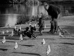 Feeding Time (aquanout) Tags: people birds animals park lake water