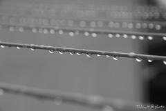 It's raining today.. (Thibault B Photography) Tags: white black france macro water grenoble noir pluie drop raining blanc goutte isre nikond60 noiretbanc