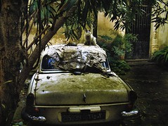 Urban Decay (Fadi Asmar ^AKA^ Piax) Tags: old lebanon abandoned car cat hotel war decay district civil 1975 beirut deserted 1990 deteriorated liban battles supershot superaplus aplusphoto goldenphotographer ainelmriesseh diamondclassphotographer