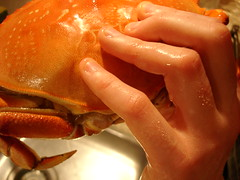 freshly cooked dungeness crab