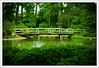 (.cpt) Tags: bridge garden japanesegarden texas houston canonef2470mmf28lusm hermanpark 30d 2470mm favoritegarden