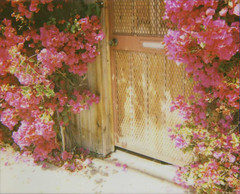 pink azaleas (jena ardell) Tags: california door flowers polaroid outside pretty sidewalk polaroidspectra culvercity pinkazaleas jenaardell