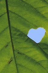 heart of a leaf (wildlens) Tags: art  jadeja manjeet superhearts flickrphotoaward yograj manjeetyograjjadeja