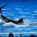 SeaWorld Orlando_1