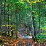 Enchanting Trail