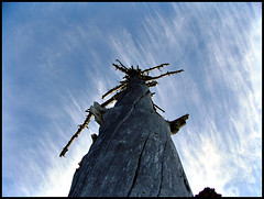 High Sky (Elida :)) Tags: blue sky tree norway closeup forest norge himmel deadtree skog trondheim tre elida onlyyourbestshots