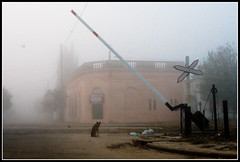 7.48am (I'm too misty) (zaqi) Tags: trip travel dog mist holiday argentina misty train tren perro solo concordia niebla entrerios jesters nadie zaqi filmformat abigfave anawesomeshot aciago szaqii myargentina utata:project=decay