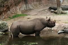 rinoceronte libre