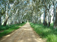Country Road (Denis Fox) Tags: road green rural point landscape country australia grampians victoria vanishing hallsgap gumtrees newphotographer