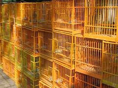 bird hongkong market cage