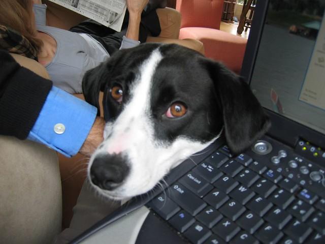 Latch-key dog