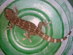 big.lizard-uninvited.guest