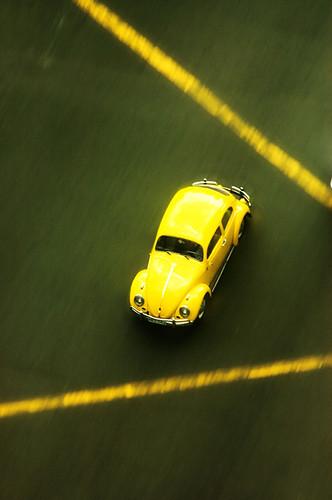yellowbug