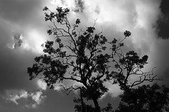 Growing Storm (atomicjeep) Tags: summer sky blackandwhite holiday tree silhouette clouds digital scotland moody atmosphere creativecommons bute rothesay
