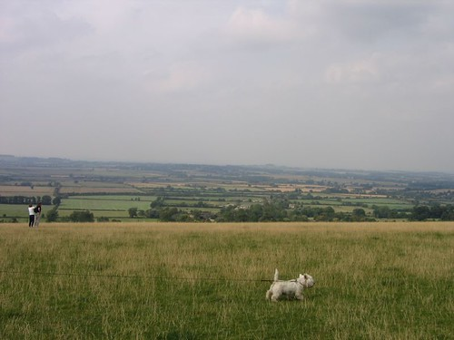 A dog on a leach in a field