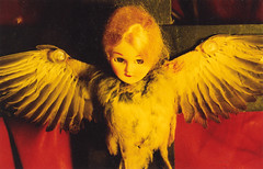bird_doll (Cyberoptix™) Tags: stilllife film bird deadbird old cross angel wings feathers crossprocessed yellow doll nature goth baroque